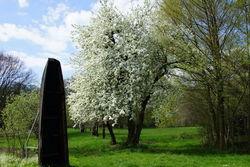 Obstbaumblüte.