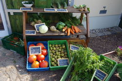 Frisches Bio-Gemüse aus eigenem Anbau.